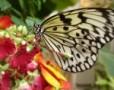 Cei mai frumosi fluturi din Viena