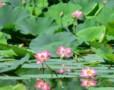 Roz si verde de vara in Parcul Circului din Bucuresti