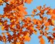 Toamna in Bucuresti: Parcul Herastrau in octombrie