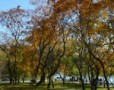 Toamna in Bucuresti: Parcul Alexandru Ioan Cuza (IOR)