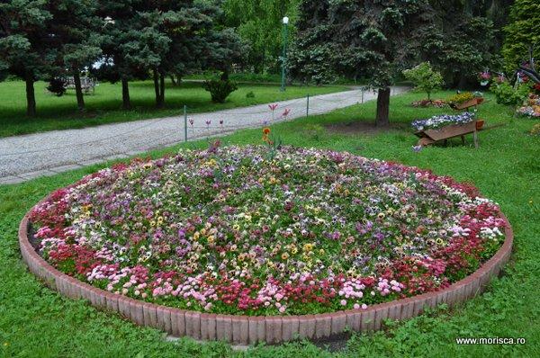 flori de primavara Curtea de Arges