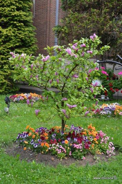 Arges_Manastirea_Curtea_de_Arges_magnolie_31