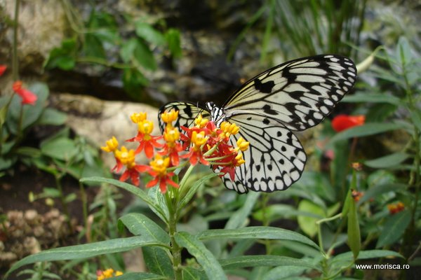 Fluturi la Schmetterlinghaus (Imperial Butterfly House) in Viena