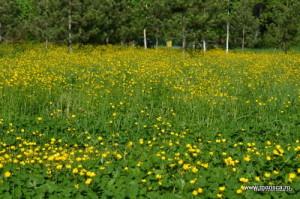 Bucuresti_Gradina_Botanica_lan_de_flori