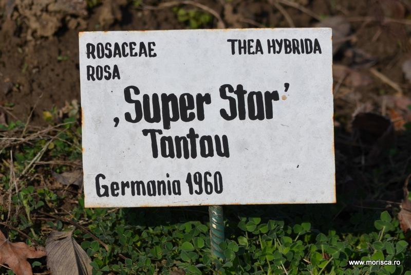 Primavara in Gradina Botanica din Bucuresti
