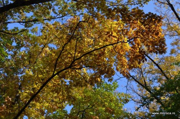 Culori de toamna in Gradina Botanica din Bucuresti