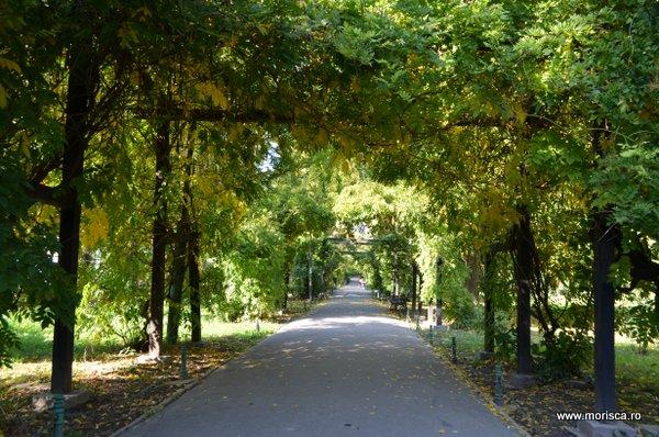Toamna in Gradina Cismigiu din Bucuresti