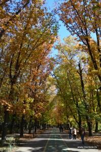 Parcul Herastrau Bucuresti toamna