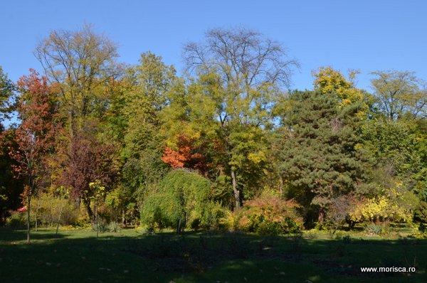 Culori de toamna in Parcul Herastrau din Bucuresti