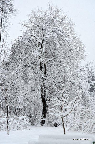 Zapada iarna in Parcul Herastrau din Bucuresti
