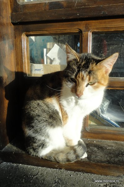 Pisica in Balcic, Bulgaria