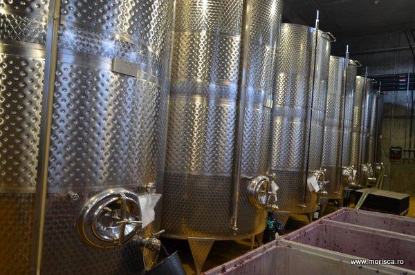 Degustare de vinuri la crama Lacerta