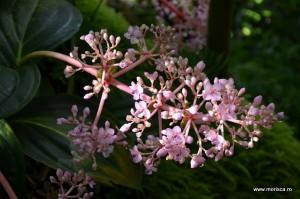 Sere flori gradina botanica Nymphenburg in Munchen