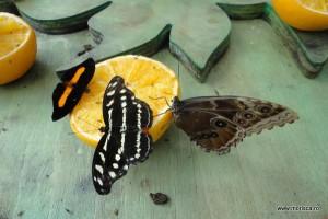 Fluturi la Natural History Museum Londra