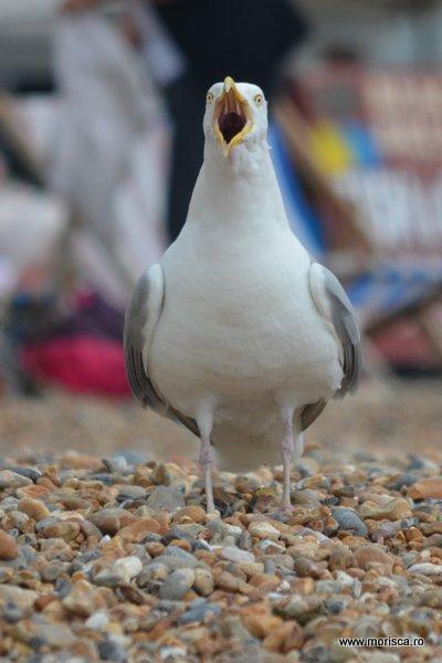 Marea_Britanie_Brighton_Pier_16
