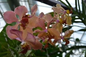 Orhidee la Gradina Botanica din Munchen / Botanischer Garten Munchen
