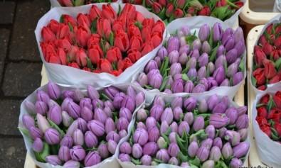 Piata de flori din Amsterdam - Bloemenmarkt