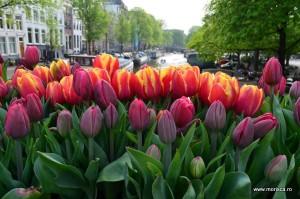 Primavara in Amsterdam