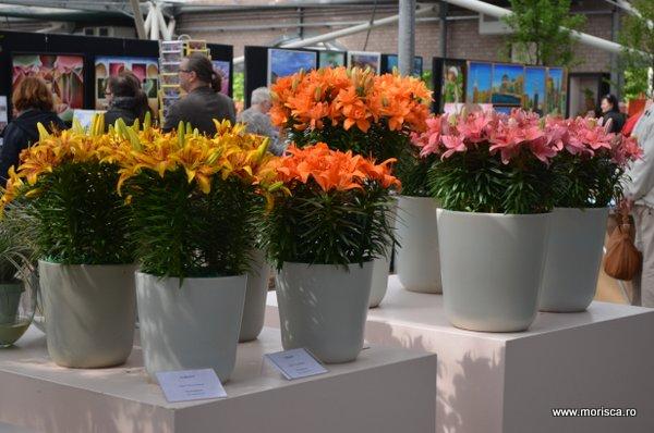 Expozitie de crini la Keukenhof, Olanda