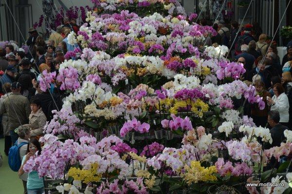 Expozitie de orhidee la Keukenhof, Olanda