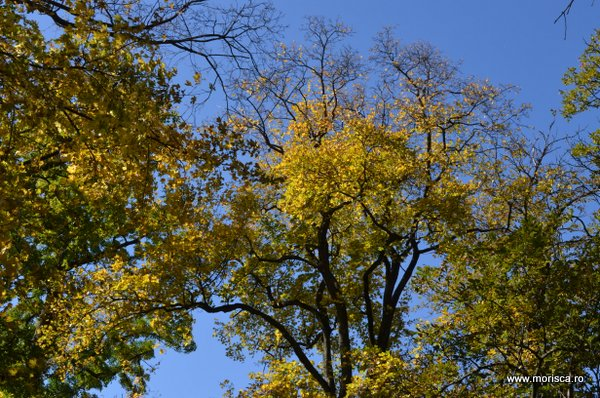 Copaci colorati toamna