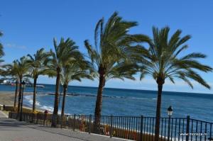 Palmieri pe plaja din Marbella (Costa del Sol - Spania)