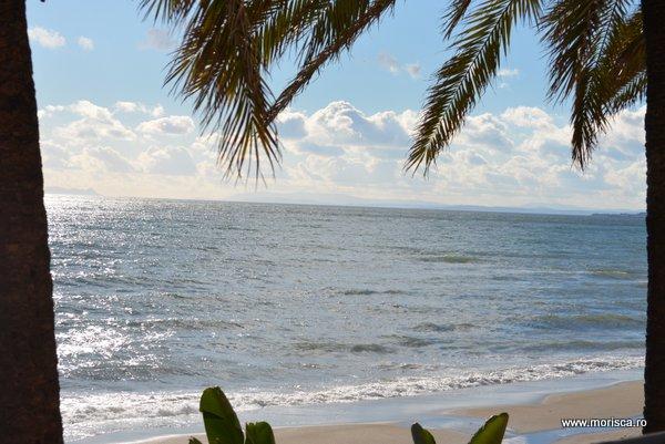 Palmieri pe plaja din Marbella - Spania