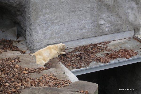 Gradjna zoologica din Budapesta